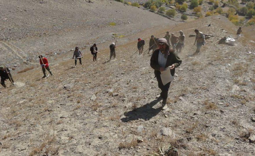 کشاورزان جمع آوری هنگ و زیره در بدخشان