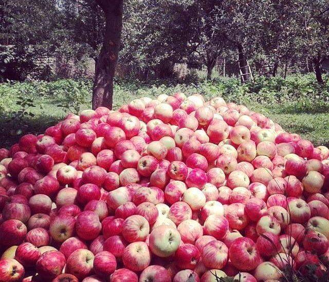 سیب رخش دو